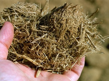 تولید خمیر کاغذ از باگاس و ضایعات کشاورزی