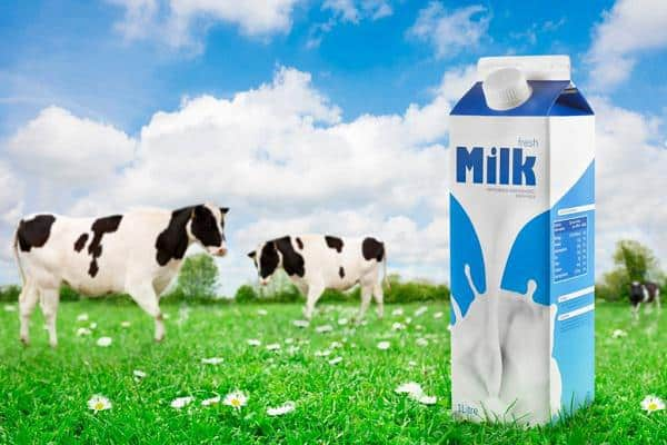 طرح توجیهی گاو داری شیری