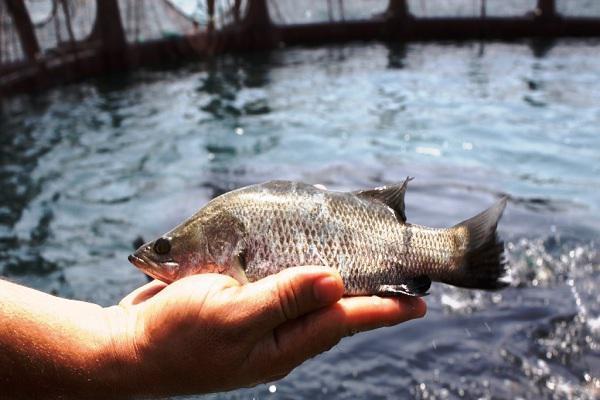 طرح توجیهی پرورش ماهی