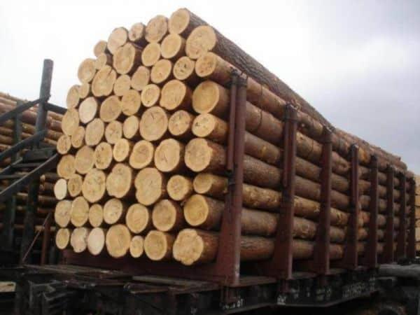 زراعت چوب - صنوبرکاری